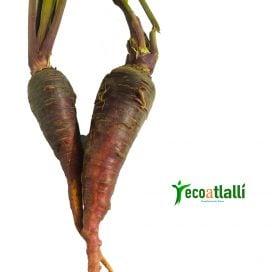 Zanahoria Bicolor