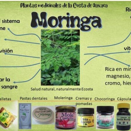 Cápsulas de Moringa