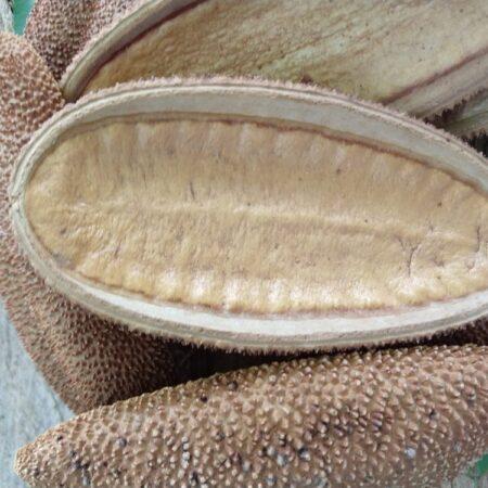 Platos botaneros de semilla (10 piezas)