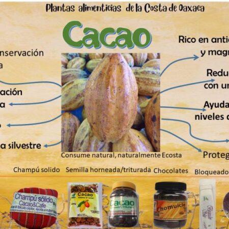 Cacao en grano 1 kg