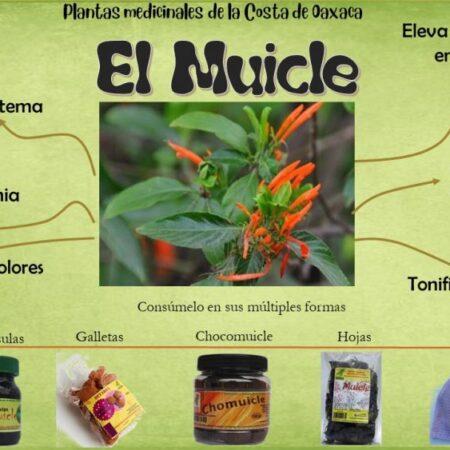 Capsulas muicle