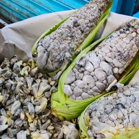 Huitlacoche Temoaya 250 gr