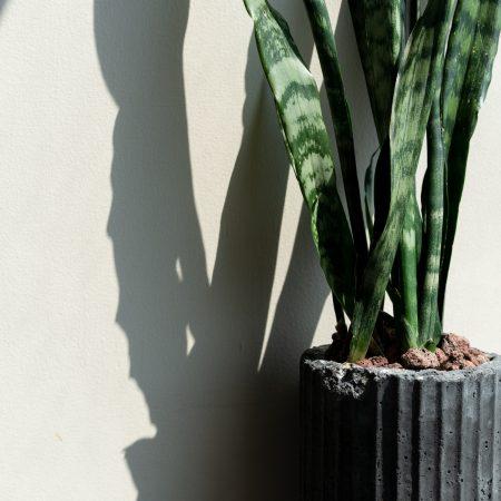 Maceta de concreto 'Anken' con planta espada ~producto único